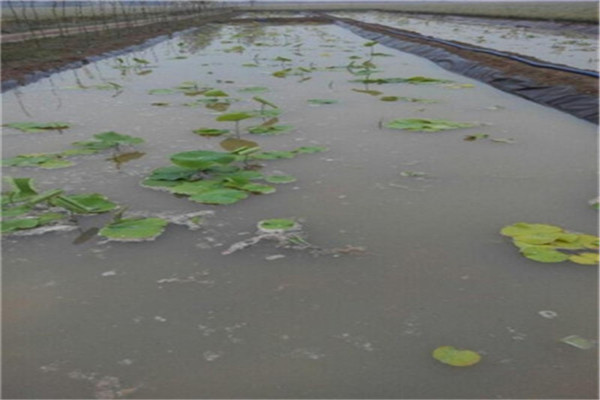 防渗膜和防水毯用于鱼塘哪个更好