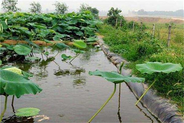 用藕池土工膜种植有哪些好处
